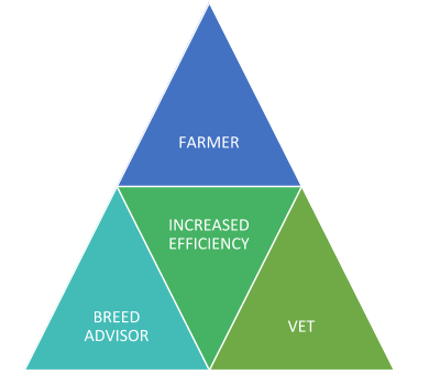 cattle genetics efficiency