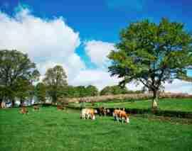 Under-representation of females in Irish Agriculture