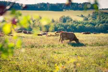 dairy farmers NI