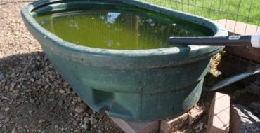 Water Supply - contaminated livestock water - water treatment