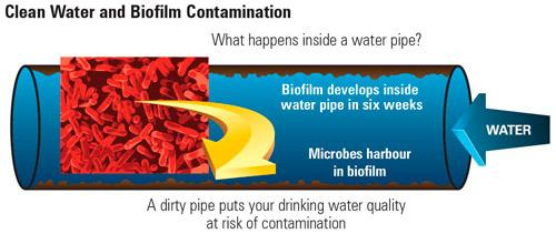 Water Supply - Clean Water and Biofilm Contamination