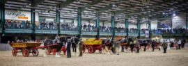 Shire Horse Show - Equestrian Shows - March - Staffordshire