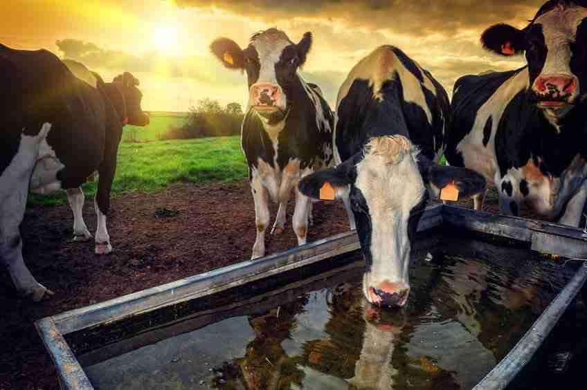 Cut farm inputs by improving water efficiency