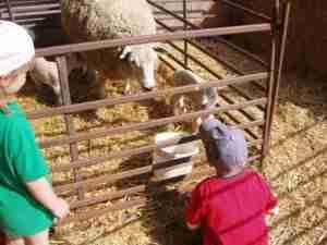 Nursery kids on the farm